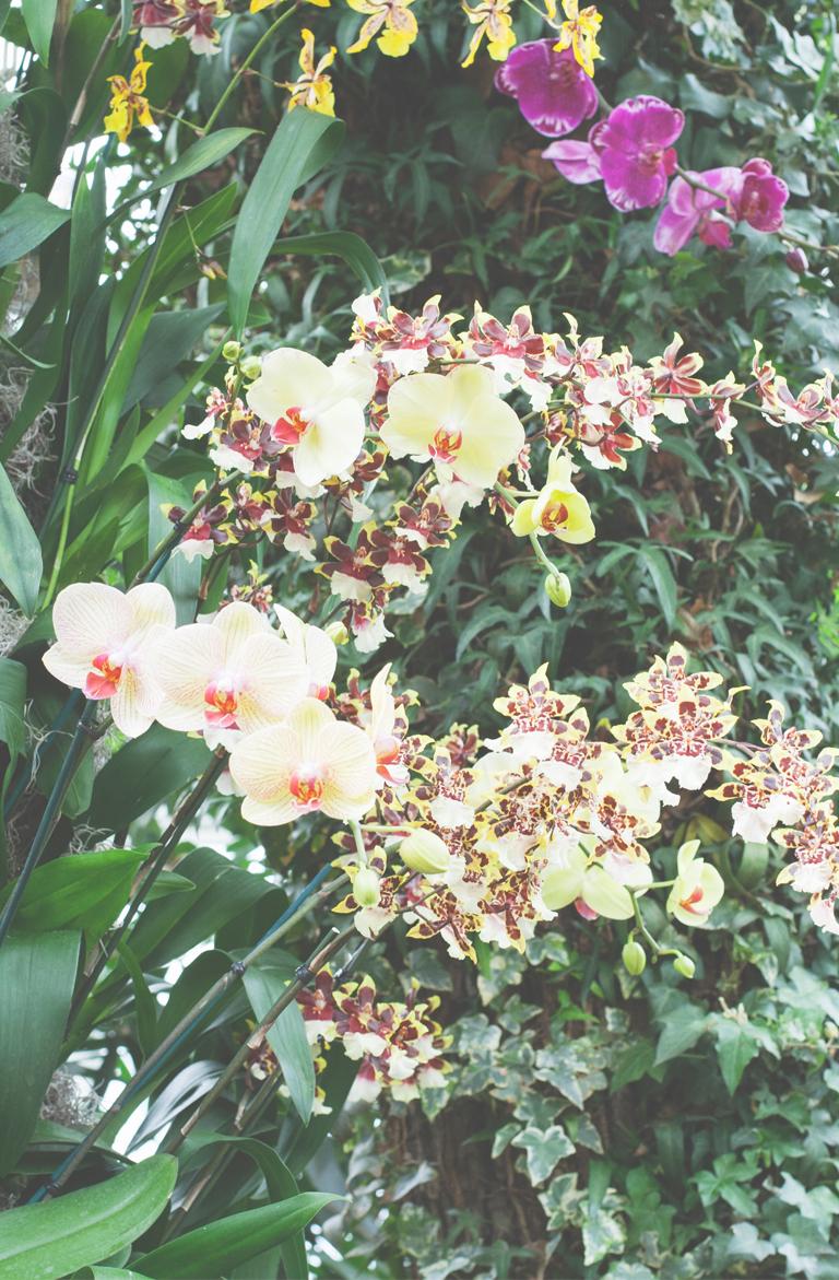 manyorchids