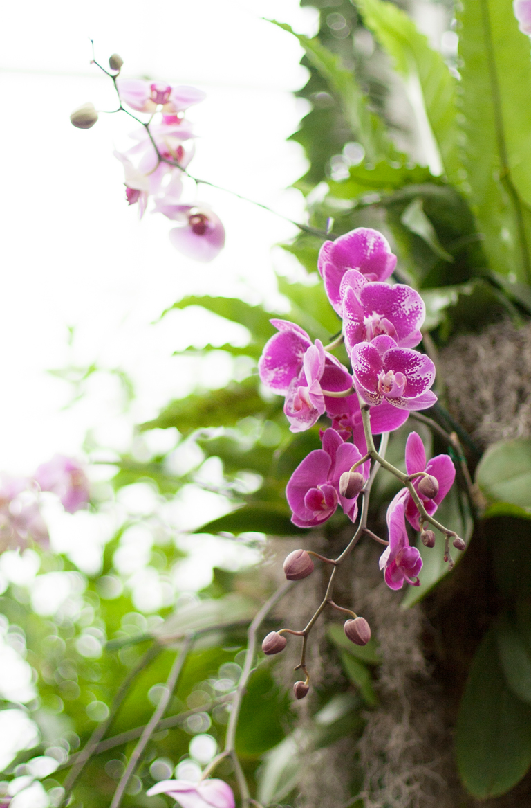 purpleorchid